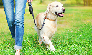 Practical dog leads
