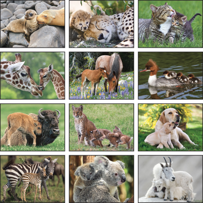 Picture of Animal Babies Wall Calendar