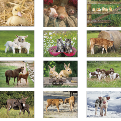 Picture of Baby Farm Animals Wall Calendar