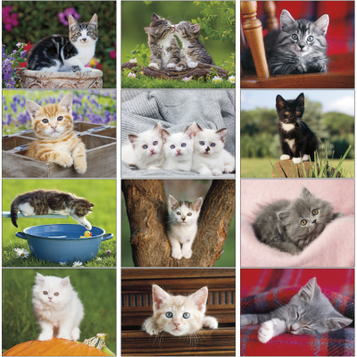 Picture of Kittens Wall Calendar