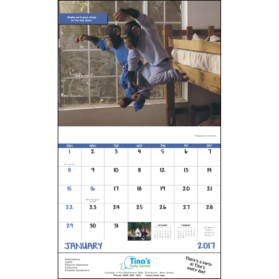 Picture of Monkey Mischief Wall Calendar