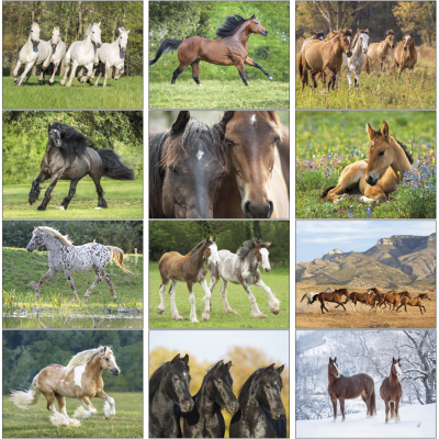 Picture of Horses Wall Calendar