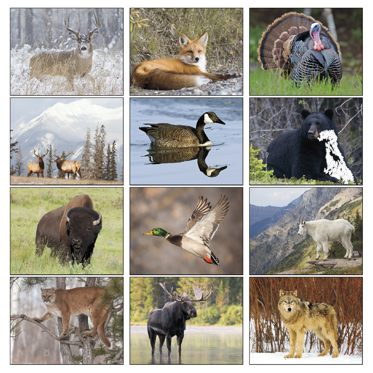 North American Wildlife Wall Calendar Mines Press