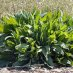 Athletes Nation