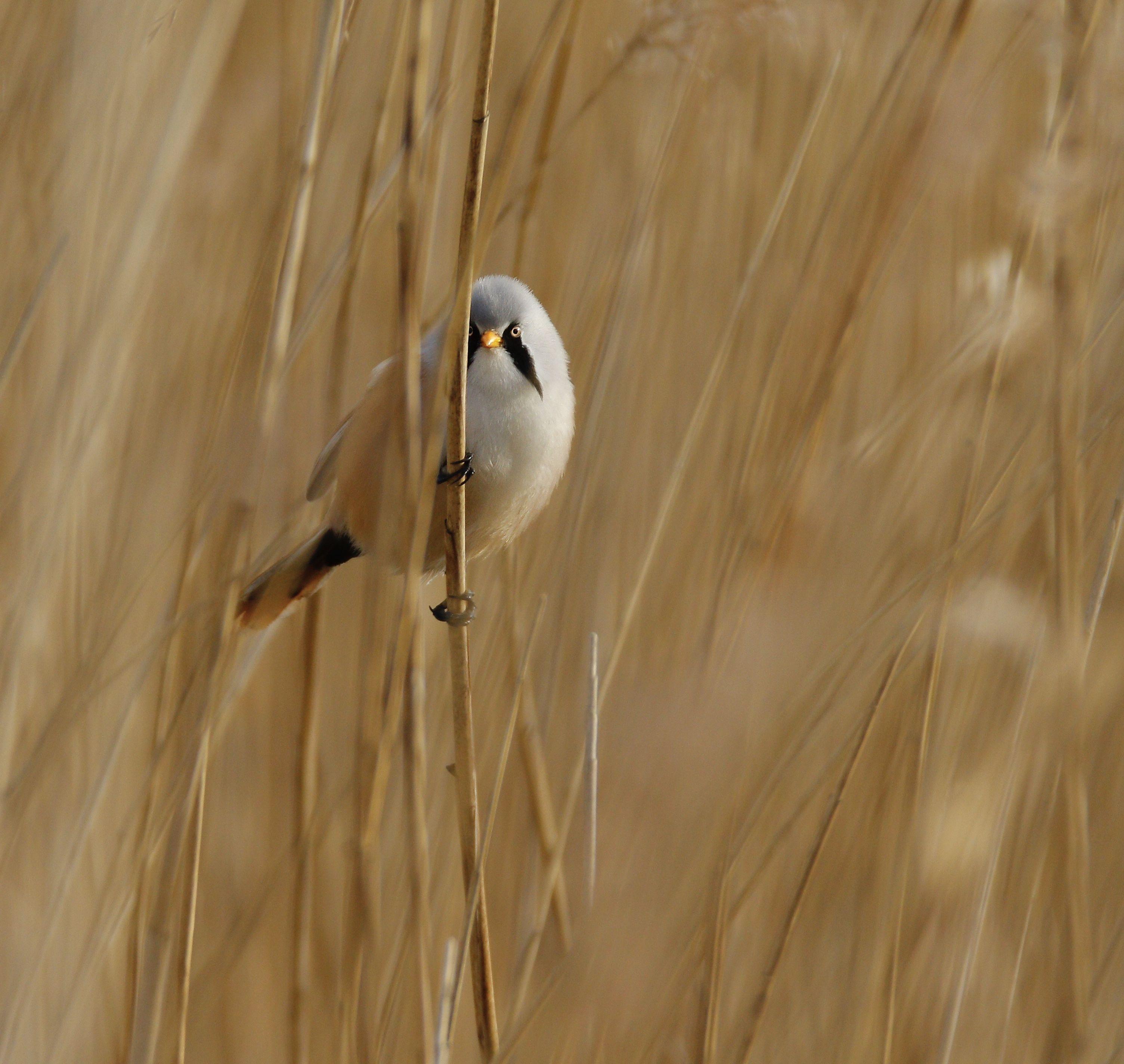 vogels bij naardermeer