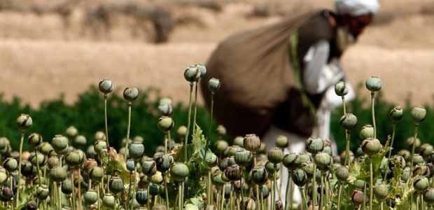 Check out our latest update on drug policies in South Asia