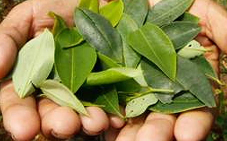 Hora de acordar: Uma abordagem histórica da regulação de estimulantes de origem vegetal