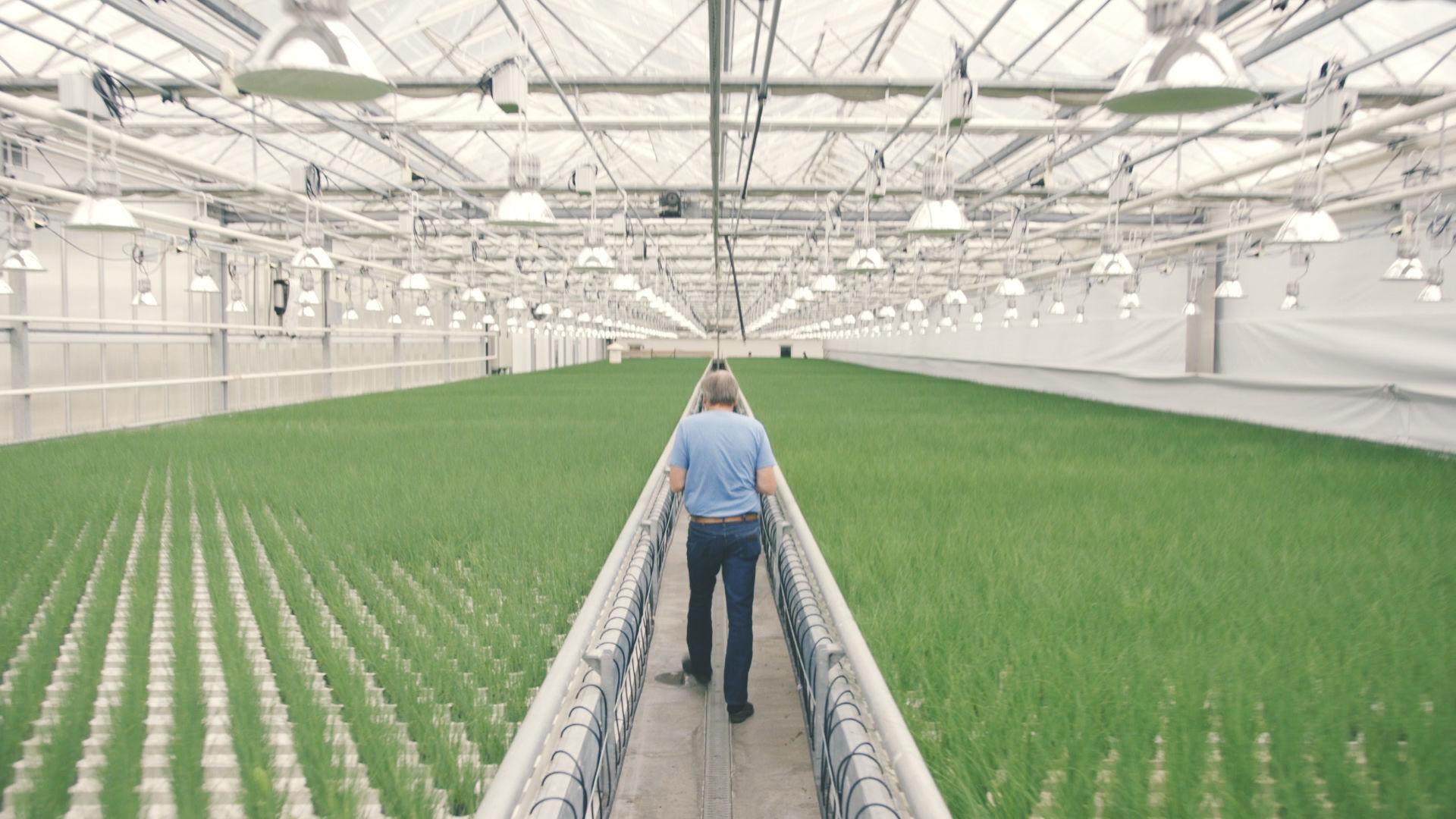 Gartneren har studert urter i femten år, Hans Erik sier likevel at han lærer noe nytt hele tiden.