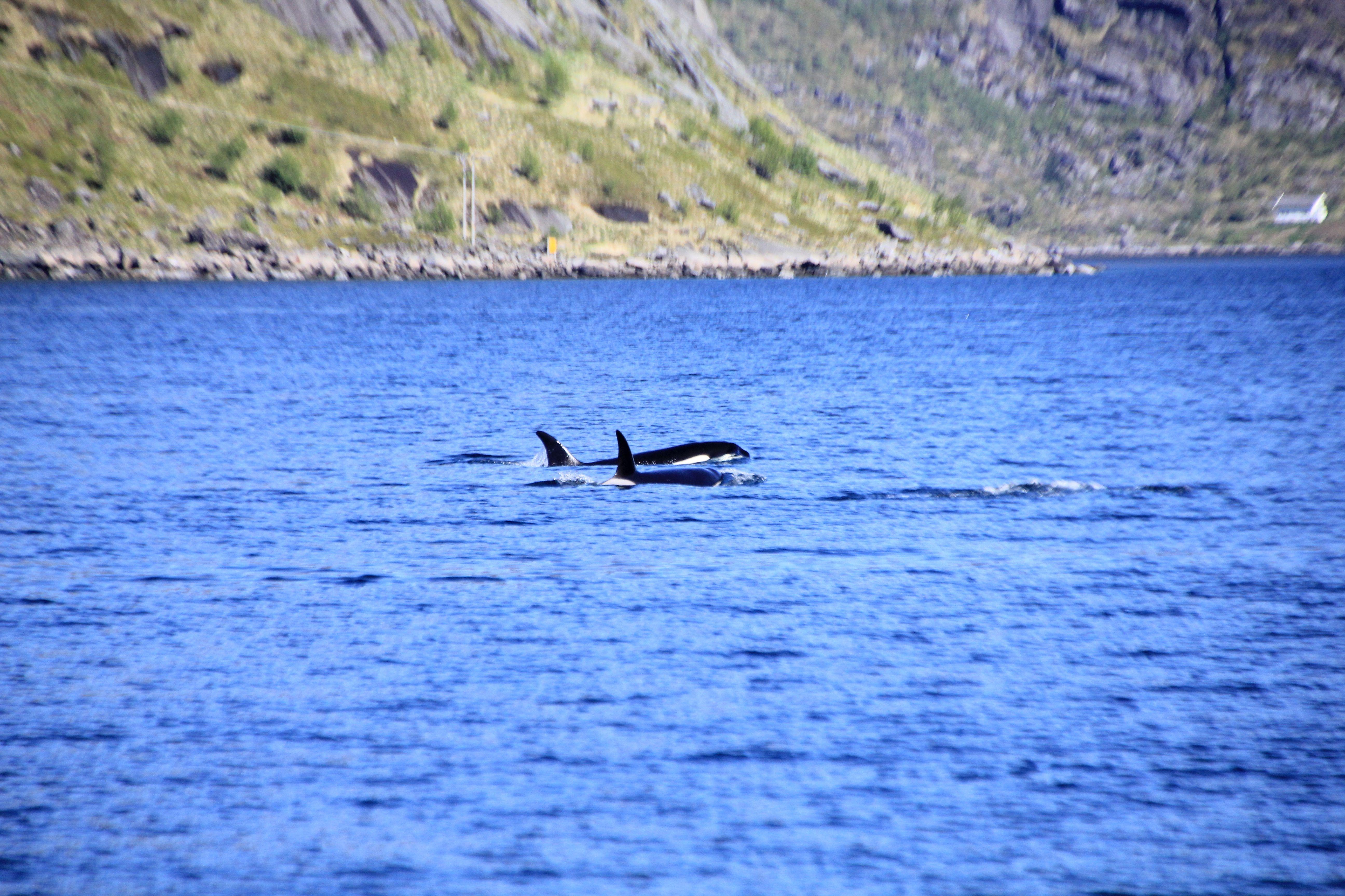 Da vi ankret opp første natten i fjorden, kom gamle venner på besøk og hilste god morgen.