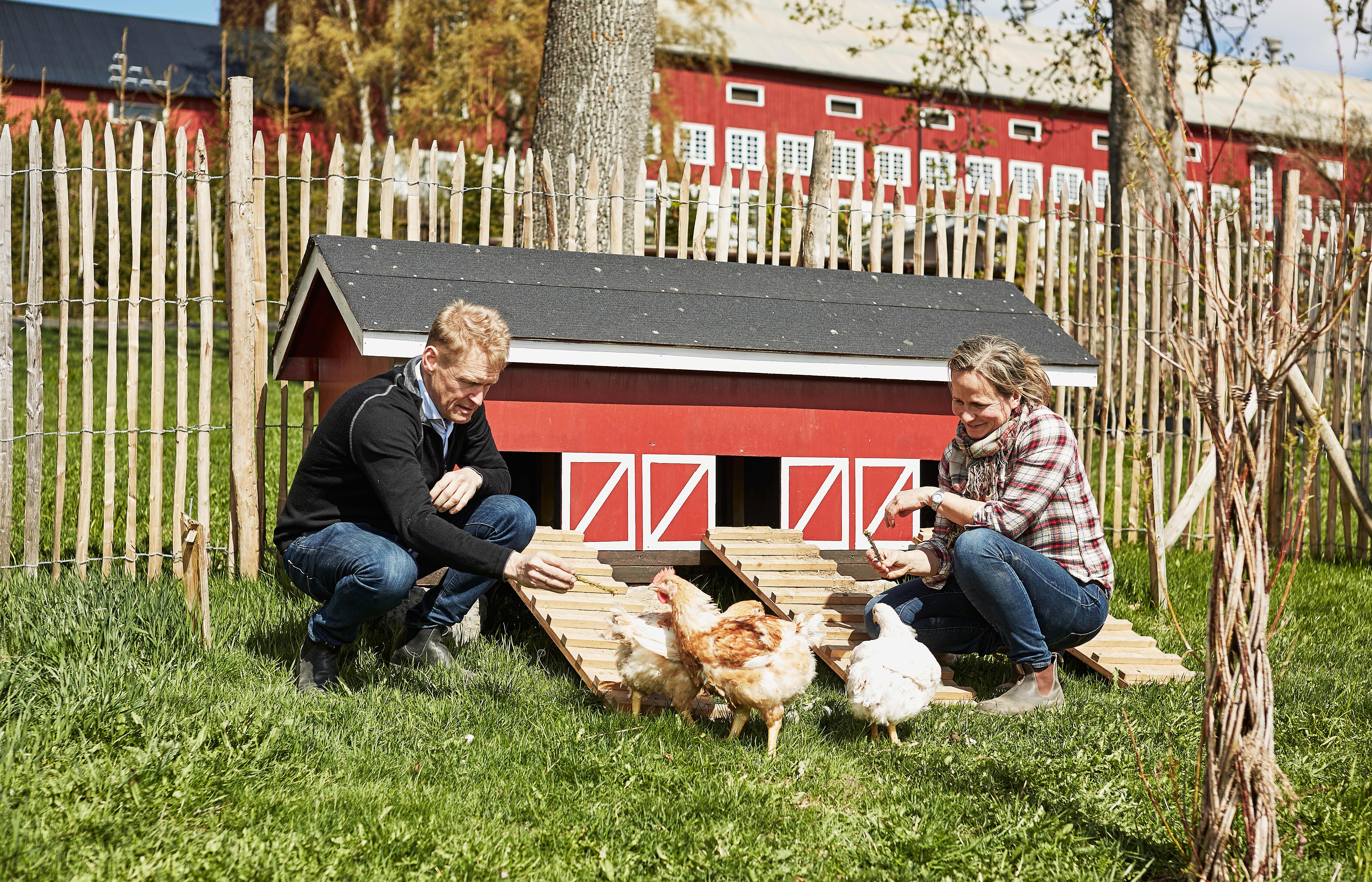 UTEOMRÅDET: På gården til Are Herrem og Marianna Olssøn har kyllingene et uteareal som tilsvarer fire kvadratmeter per kylling.