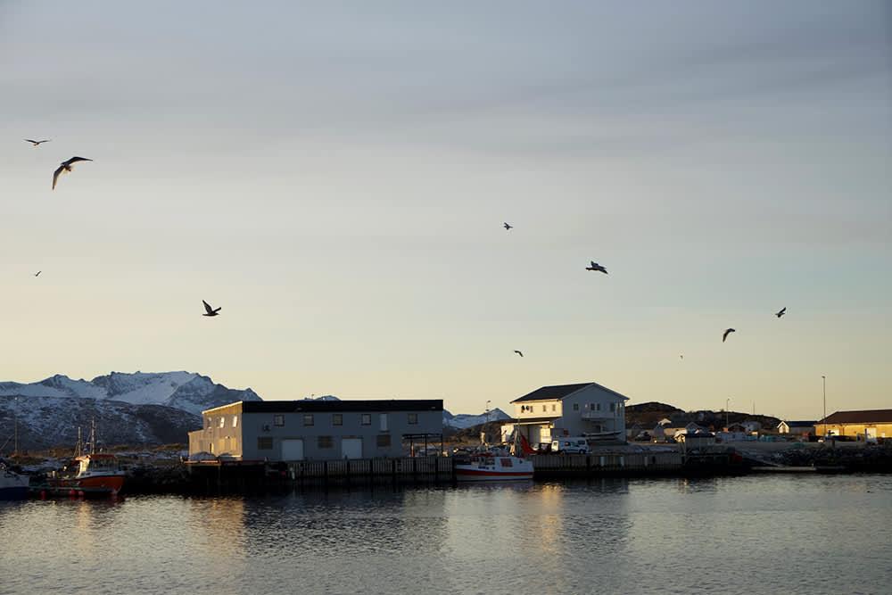 KIWIs reporter reiste til Brensholmen i Troms for å følge skreien fra hav til butikk.