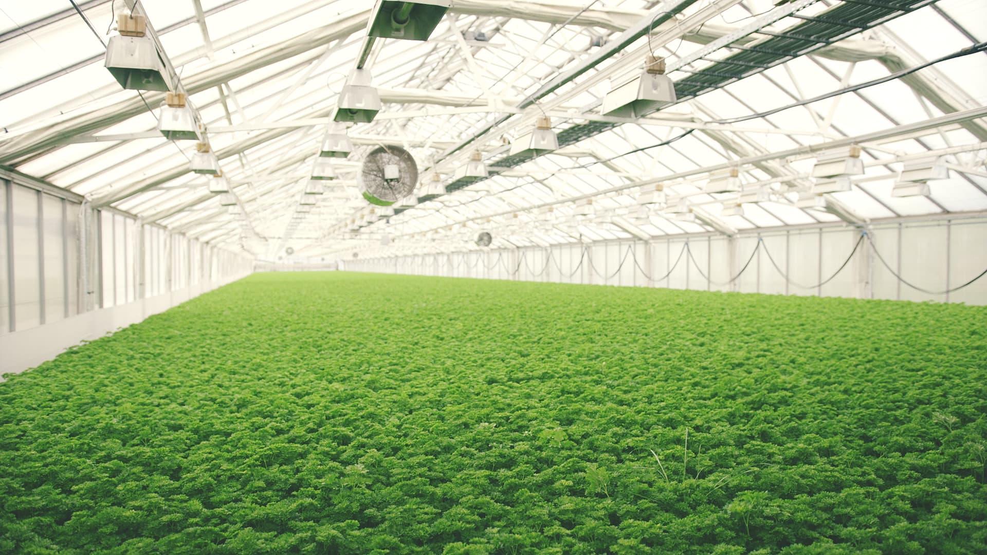 Snarum gartneri er 8000 kvadratmeter med planter helt fri for sprøytemidler.
