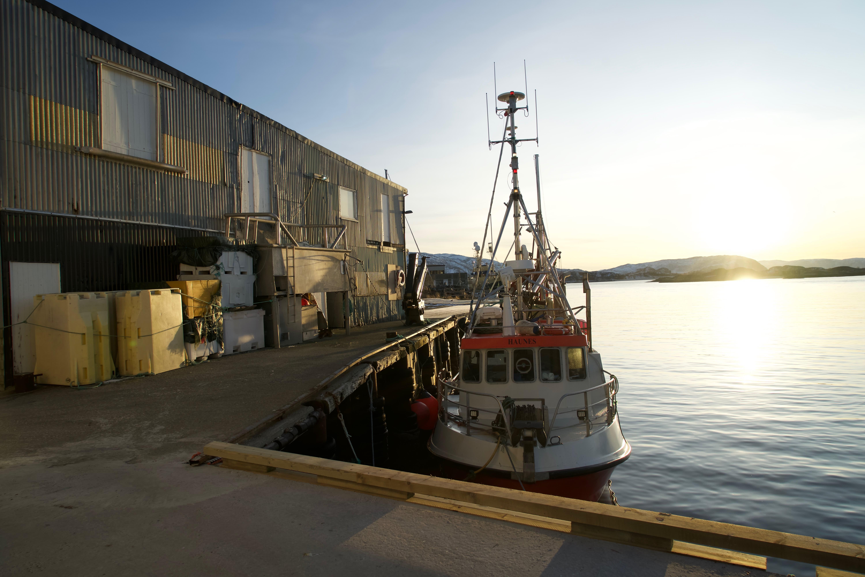I hamn på Sommarøy ligger båtene klare til å jakte skrei.