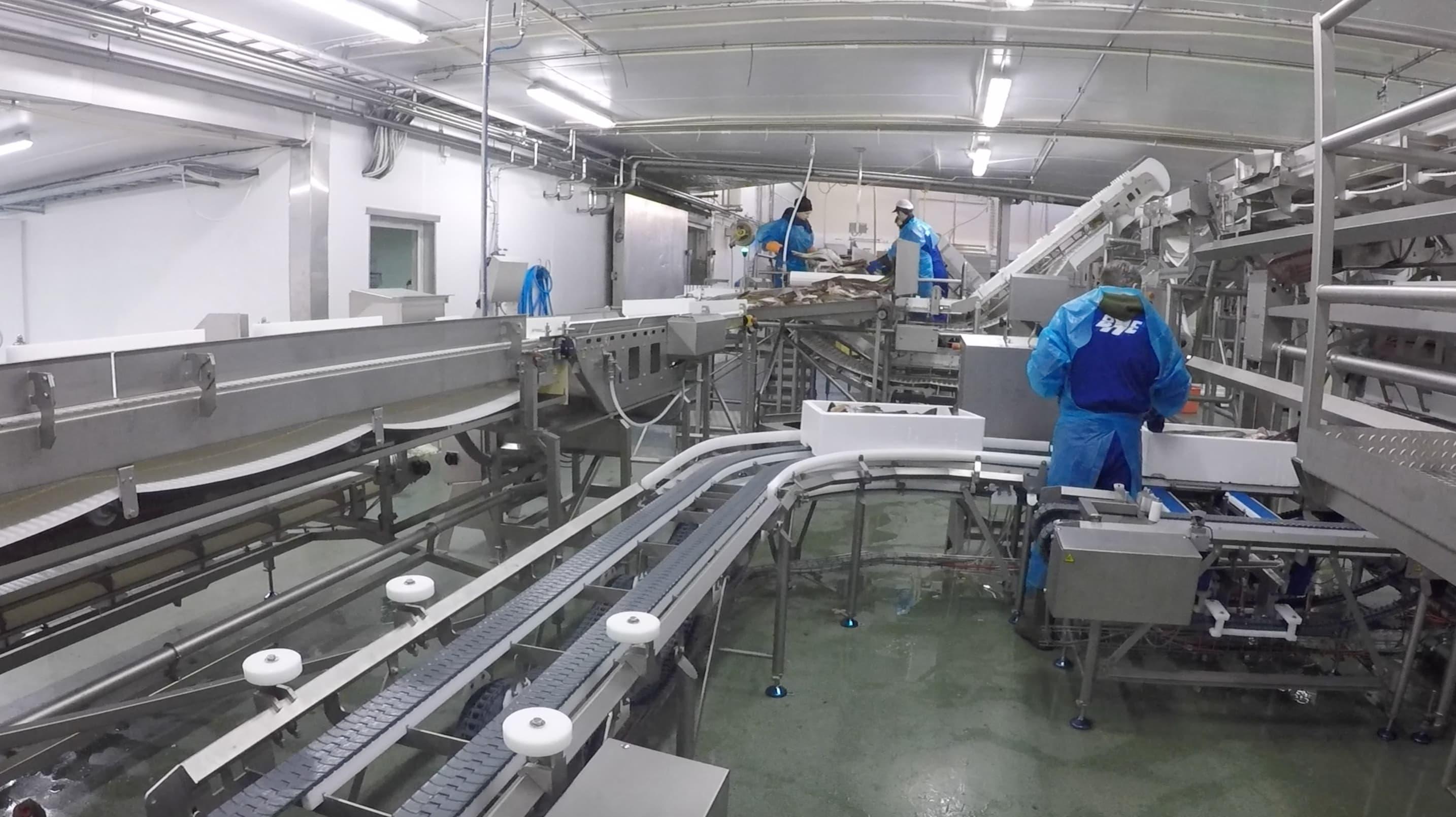 På fiskemmotaket går produksjonen på skinner.
