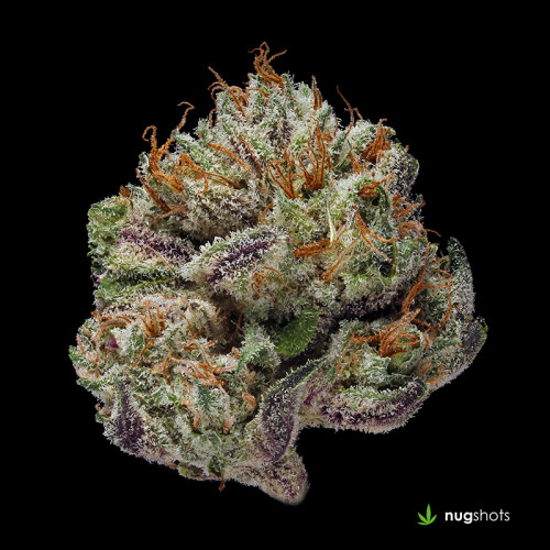 Cataract Cannabis Strain
