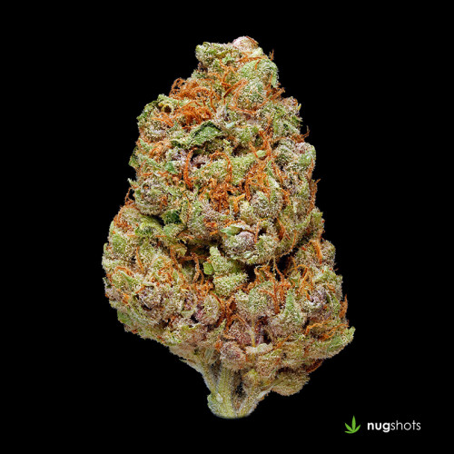 Ace of Spades Cannabis Strain