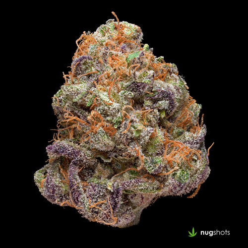 Purple OG Cannabis Strain