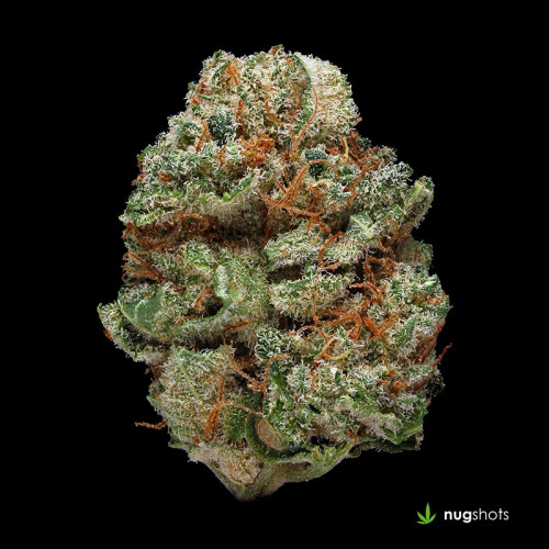 Blue Kush Cannabis Strain