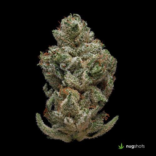 Pestilence Cannabis Strain