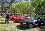 Mazdas in the Park