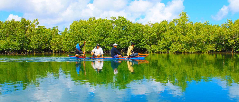 Mangrove Reserve Cruise