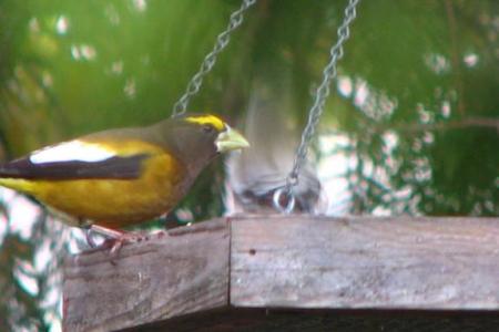 Oregon Birds and Wildlife