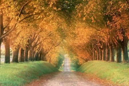 Autumn Photos I