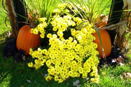 Autumn Photos II