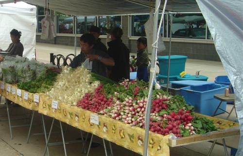 Farmers Market and Fall Foliage