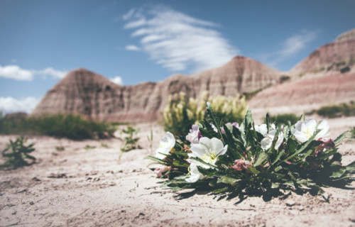 What You Need To Know About Desert Wildflowers