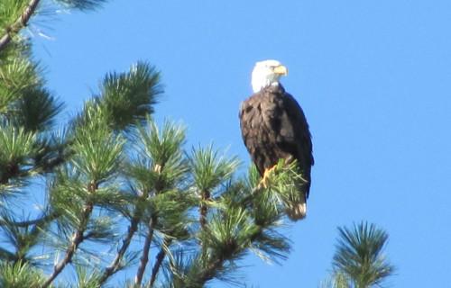 6 Top Birding Spots near Lassen Park