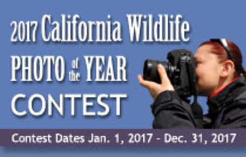 California Watchable Wildlife Photography Contest 2017