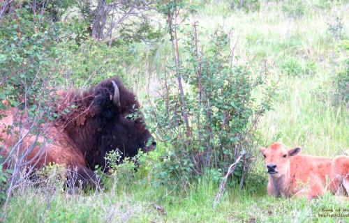 Springtime Animal Babies in Western Montana near Bear Spirit Lodge