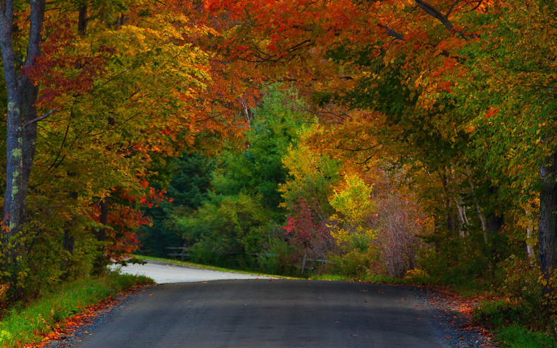 5 Must-do Biking Spots Near The Vermont Inn This Fall