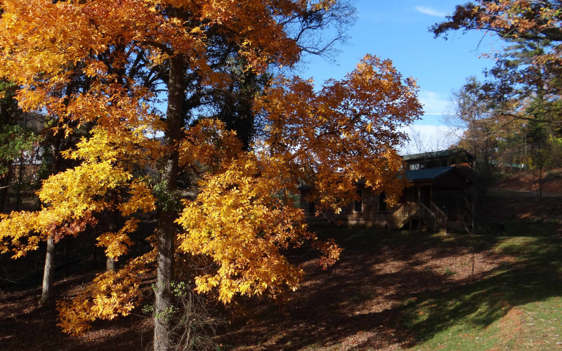 Arriving Any Day: Asheville and Western North Carolina Fall Colors