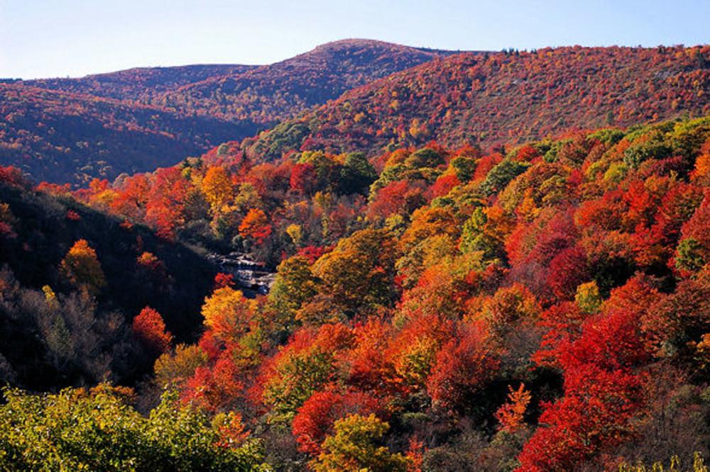 Asheville's Peak Leaf Color Location