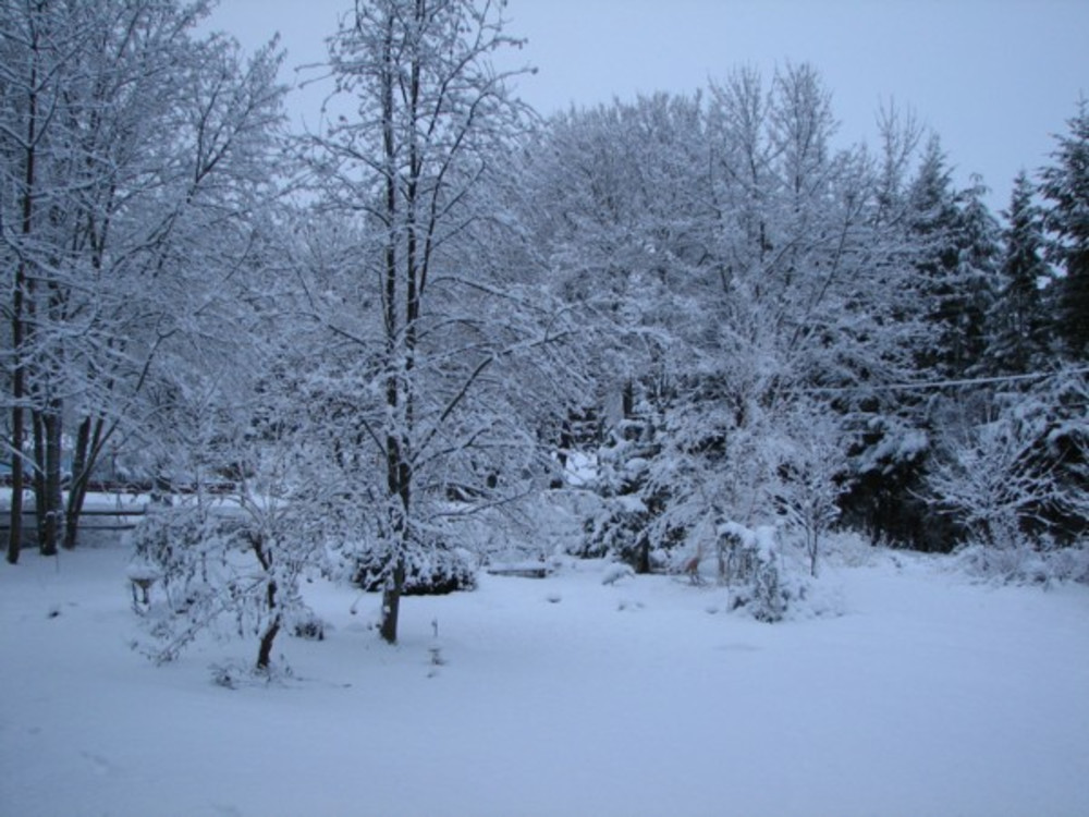 First Snow ~ Care to Predict When it Will Happen?