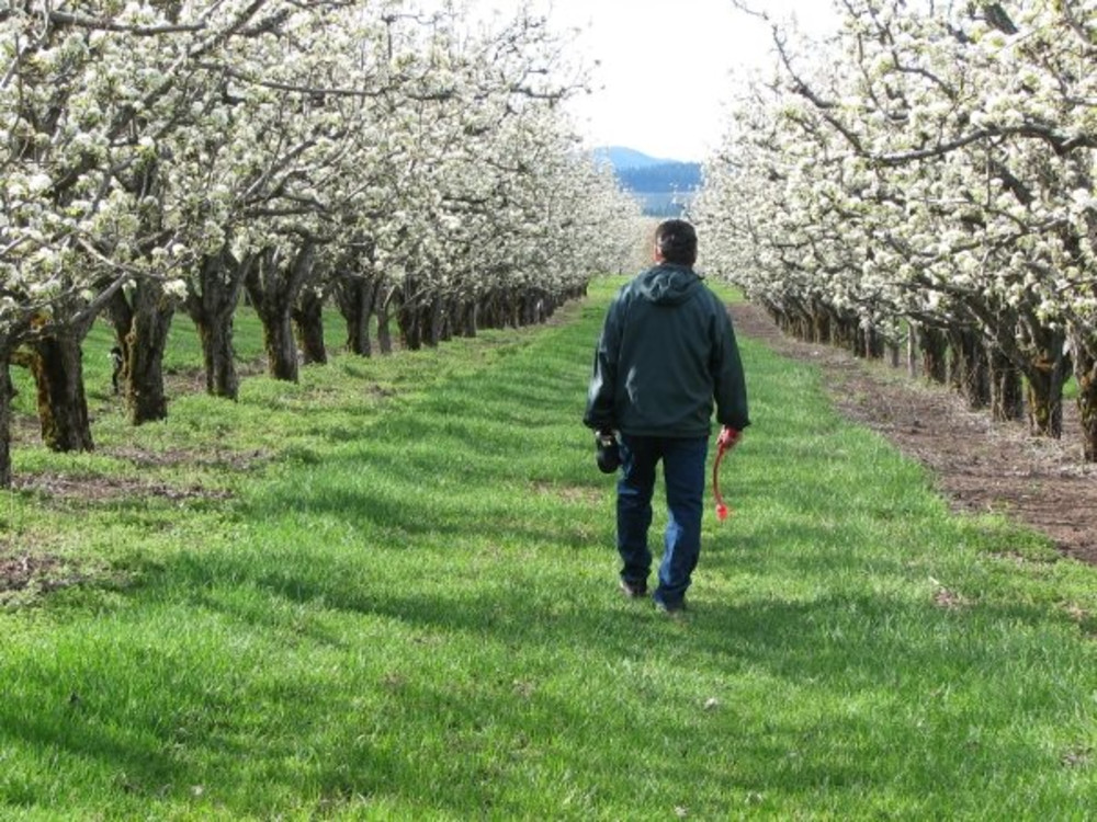 Historic Walking Tours in Hood River Oregon