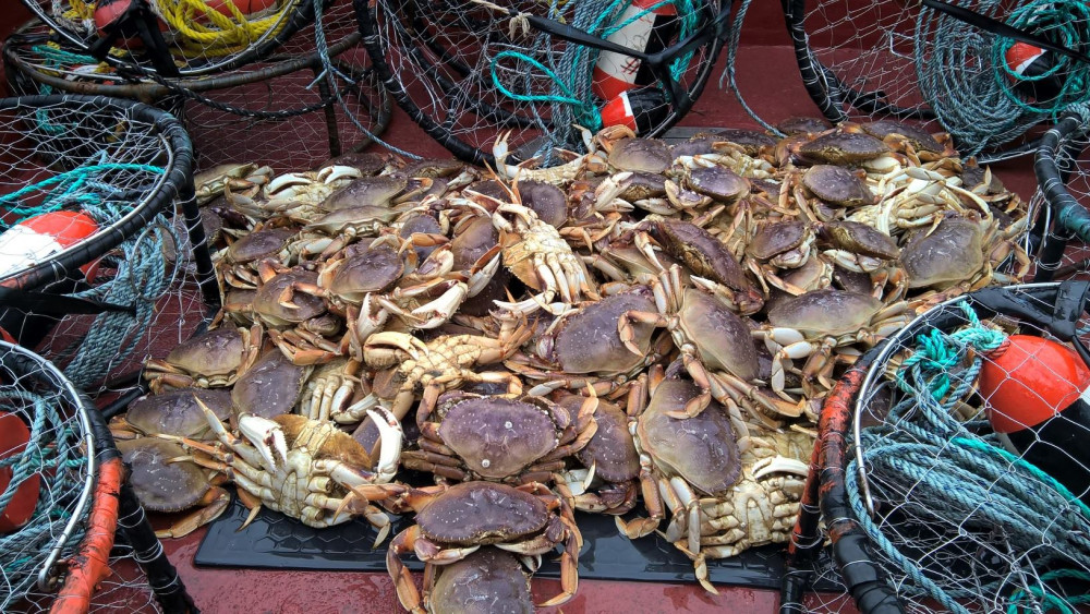 LBP: The PNW's Dungeness crab country