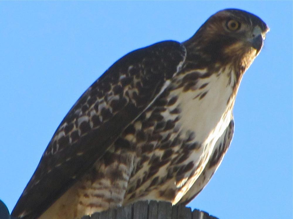 Bird Watching at Bear Spirit Lodge B&B St. Ignatius, Montana