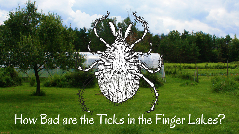 How Bad Are the Ticks in the Finger Lakes?