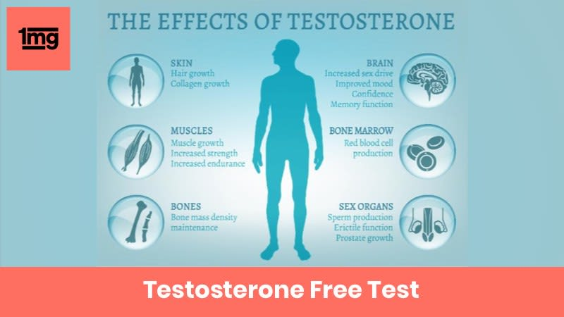 Testosterone Free