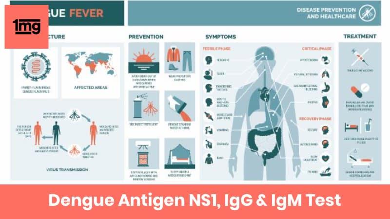 Dengue Antigen NS1, IgG & IgM