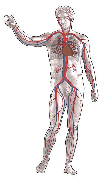 Zu viel Salz schädigt Organe, Herz und Haut
