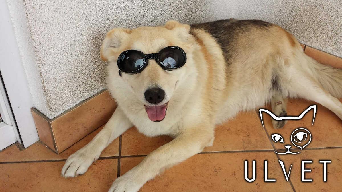 Okulary zaakceptowane