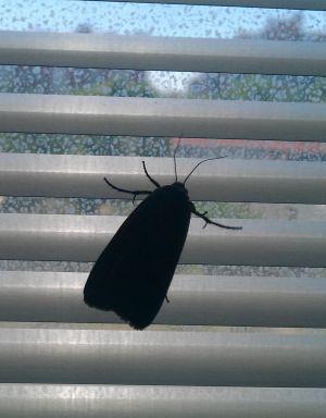 plaga de mariposas en madrid