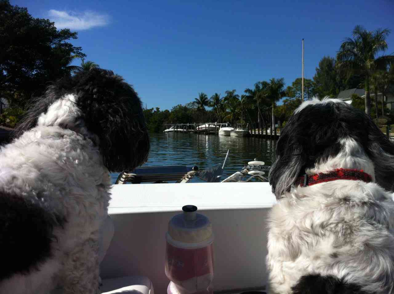 Vet Street Rates Sanibel - Top Pet-Friendly U.S. Destination
