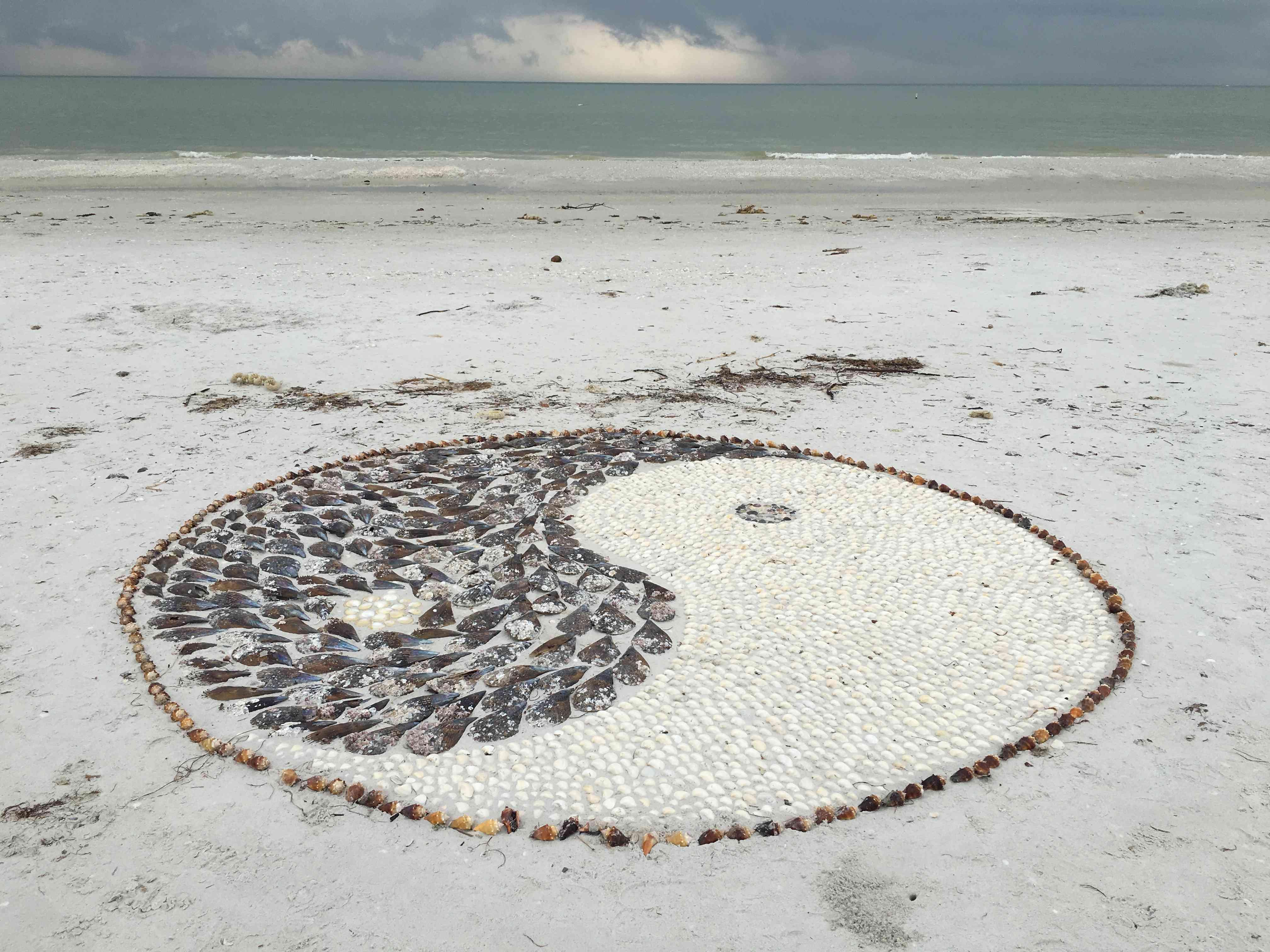 National Seashell Day