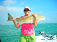 Sanibel Red Fish