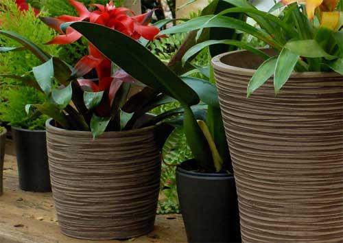 Japi lança vasos ecológicos
